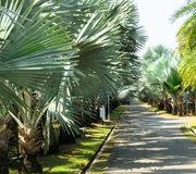 Het lopen van weg in de Pamirs-tuin stock afbeelding