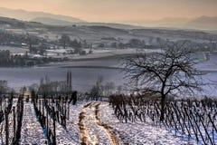 Het lopen van weg in de wijngaarden Royalty-vrije Stock Afbeeldingen