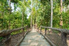 Het lopen van weg door bospark Stock Afbeeldingen