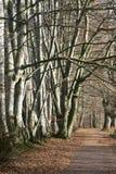Het lopen van weg door hout Stock Afbeelding