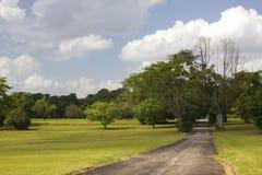 Het lopen van weg in een park Stock Fotografie