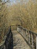 Het lopen van weg in het bos Stock Fotografie