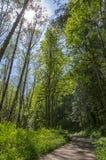 Het lopen van weg in het bos Stock Foto