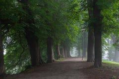 Het lopen van weg met diverse selectie van bomen aan beide kanten stock fotografie