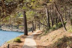 Het lopen van weg op een overzeese kust Stock Foto's