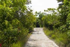 Het lopen van weg op groene tropische bos Lege manier in bloeiende de zomertuin Stock Afbeeldingen