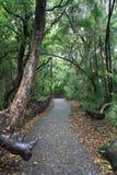 Het lopen van Weg in Victoria Falls, Zimbabwe Royalty-vrije Stock Afbeelding