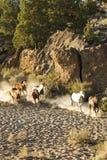 Het lopen van wild paarden royalty-vrije stock foto's