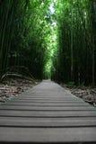 Het lopen van Zen weg in bos Stock Foto's