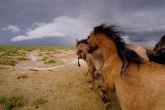 Het lopen voorwaartse paarden op de prairies royalty-vrije stock afbeelding