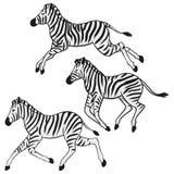 Het lopen zebras stock illustratie