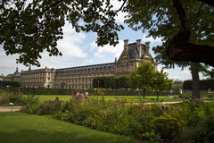 Het Louvregazon bloeit blauwe hemel Stock Foto