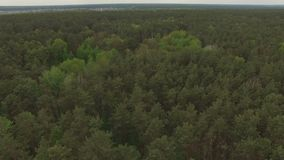Het lucht vliegen over een gemengd naaldbos stock video