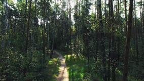 Het luchtschot van gemengde boscamera vliegt vooruit langs de weg in het pijnboom en berkbos door de boomstammen stock footage