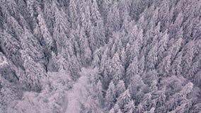 Het luchtschot van sneeuw behandelde bomen in de bergen dat neer aan een luchtschot filtert stock video