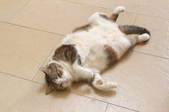 Het luie pluizige kat ontspannen op achter het Royalty-vrije Stock Foto's