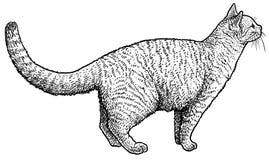 Het luisteren kattenillustratie, tekening, gravure, inkt, lijnkunst, vector Royalty-vrije Stock Afbeelding