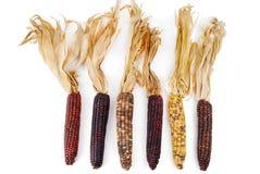 Het maïskolfgraan Indiër isoleerde Stock Afbeeldingen