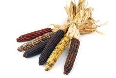Het maïskolfgraan Indiër isoleerde Royalty-vrije Stock Fotografie