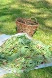 Het maaien van het gras Royalty-vrije Stock Foto's