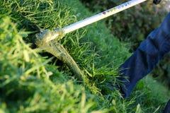 Het maaien van het gras Stock Foto