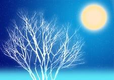 Het maanlichtnacht van de winter Stock Foto's