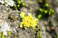 Het macro schieten van groen mos stock foto