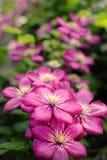 Het macrobeeld van de lente purpere violette bloemen, vat zachte bloemenachtergrond samen stock fotografie