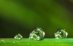 Het macropatroon van de waterdaling op grasblad en zon royalty-vrije illustratie