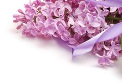 Het macroschot van lilac bloemen solated op witte achtergrond Goed voor uitnodiging en groetkaartontwerp Royalty-vrije Stock Afbeelding