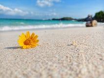 Het madeliefje van Singapore op strand royalty-vrije stock foto