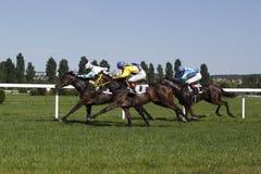 Het magische ras van Korfu bij paardenrennen in Praag Stock Foto