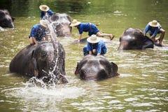 Het Mahoutsbad en maakt de olifanten in de rivier schoon Stock Foto