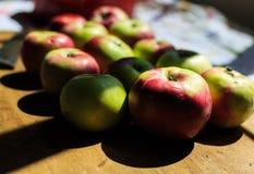 Het maken van appelmoes van organische McIntosh-appelen Royalty-vrije Stock Foto