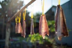 Het maken van droge vissen Royalty-vrije Stock Afbeeldingen