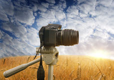 Het maken van fotografie van aard. Stock Fotografie