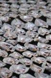 Het maken van gezouten vissen Royalty-vrije Stock Afbeeldingen