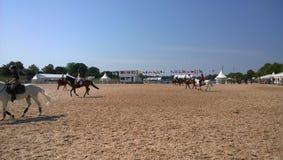 Het Malmöpaard toont Stock Fotografie