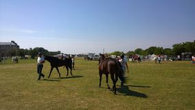 Het Malmöpaard toont Royalty-vrije Stock Afbeelding