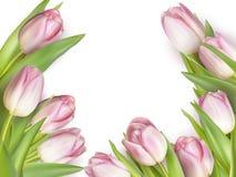 Het malplaatje of de achtergrond van het tulpenontwerp Eps 10 royalty-vrije illustratie