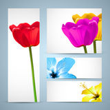 Het Malplaatje van de Aard van de Brochure van de bloem Stock Foto's