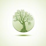 Het malplaatje van het boomembleem Groeiend bedrijfsconcept Stock Fotografie