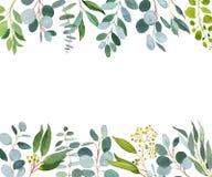 Het malplaatje van het huwelijksgroen Waterverfillustratie met eucalyptus royalty-vrije illustratie