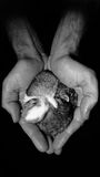 Het Mamma van het konijnhart Stock Foto's
