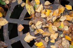 Het mangat van het drainageriool in het herfstpark royalty-vrije stock fotografie