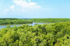 Het mangrovebos in het district kan Gio - Vietnam stock afbeeldingen