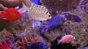 Het mariene aquarium stock videobeelden