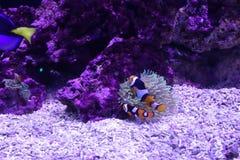 Het mariene aquatische leven royalty-vrije stock foto's
