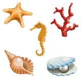 Het mariene leven Stock Afbeelding