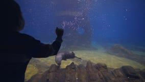 Het mariene leven in oceanarium, jong geitjejongen het letten op bontverbindingen die in duidelijk blauw water in aquarium zwemme stock video